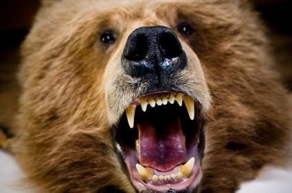 Ripple oggi crolla: l'orso graffia, tori nel trading solo con BTC sopra 0,7 dollari