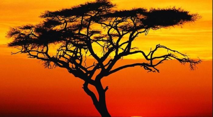 Bond africani migliori: T-bill nigeriani e bond locali ghanesi convengono?