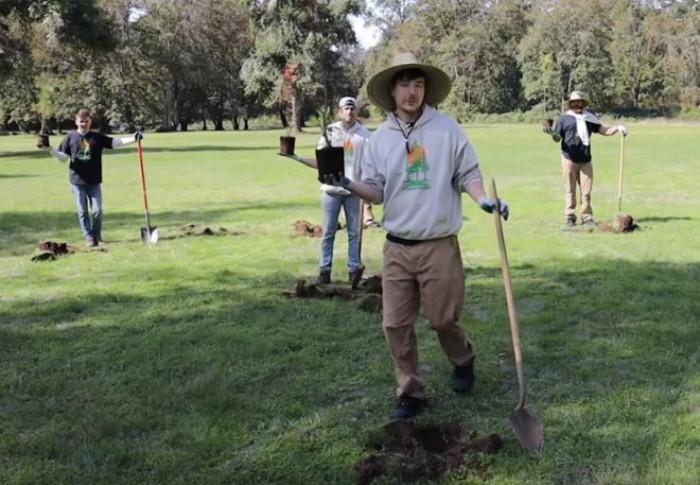 Team Trees: nasce su youtube la raccolta fondi per piantare 20 milioni di alberi