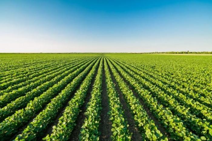 Perchè la Puglia ha perso 142 milioni di Fondi UE per lo Sviluppo Rurale?