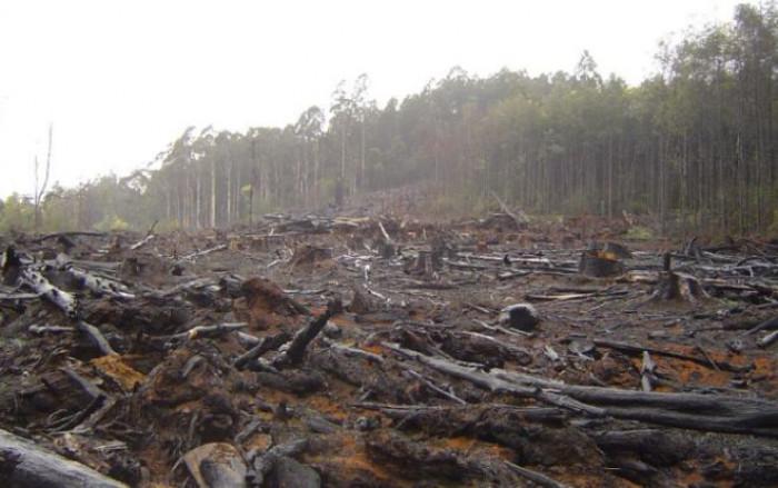 Emissioni Co2 in calo nel mondo ma non in Brasile. La causa è la deforestazione, ma chi ci guadagna?