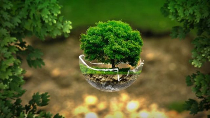 FAO, per un'innovazione sostenibile è necessaria una partnership tra pubblico e privato